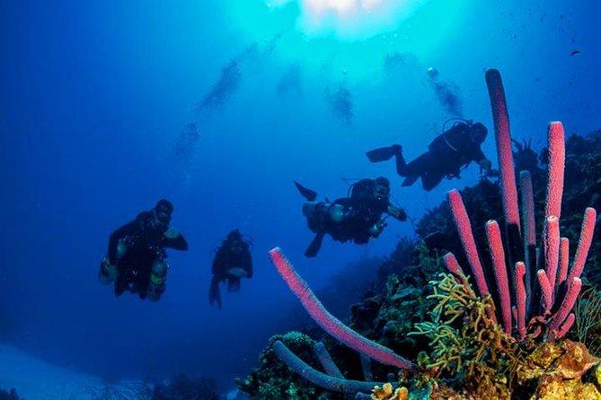 2 Tank Roatan Fun Dive, Boat Sightseeing Tour, including ground transportation, Roatan, Honduras