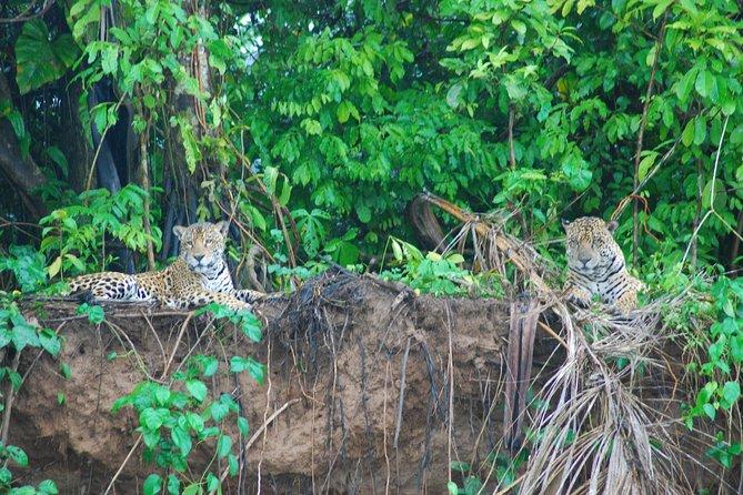 Aventura de 3 días en la selva amazónica en Eco Amazonia Lodge (alojamiento ecológico), Puerto Maldonado, PERU