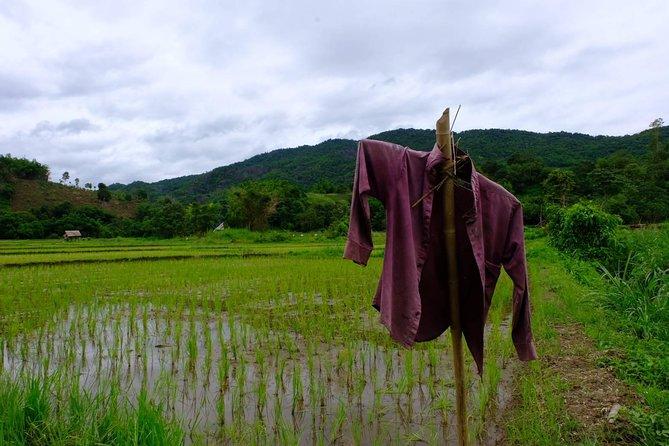 2 days 2 nights Hill Tribe Trekking in Mae Yao, Chiang Rai, Chiang Rai, Thailand