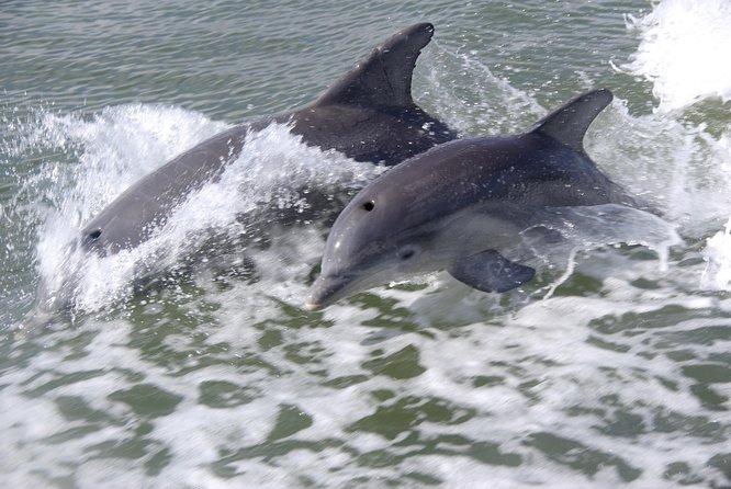 Ecotour de manatíes y aventura. Tour en Naples FL., Naples, FL, ESTADOS UNIDOS