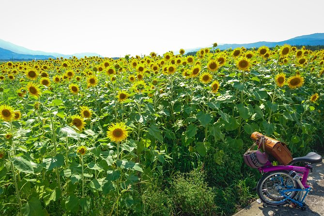 A leisurely course in the countryside of Awa City. The road in the field that spreads out on the flatland is rarely accessible by cars, and even beginners can drive bicycles with peace of mind. If you look closely at the farm roads in the fields, you can enjoy the plants that color the fields depending on the season, such as old roads, small shrines, castle ruins, and giant bush trees. It is a holding area for the Awa Open Garden, which began in 2013, and is not a tourist spot, but you can also look at a personalized garden. Italian gelato Tokushima Dolce is a stylish place where you can taste sweets with seasonal ingredients.