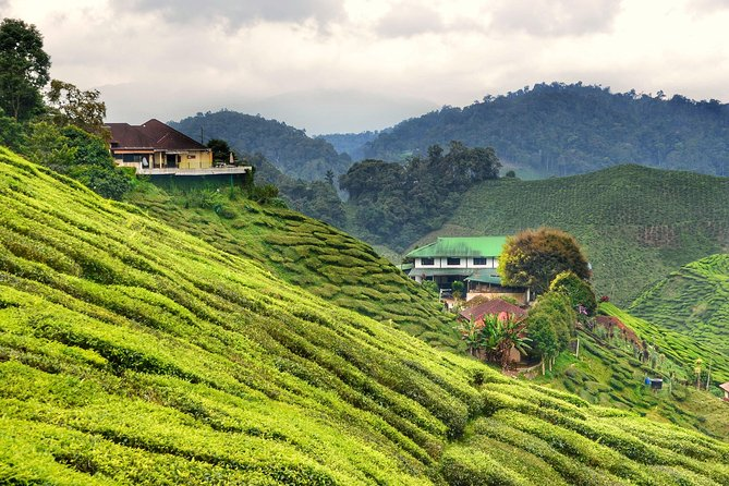 Pick-up from Cameron Highlands city by an Air-conditioned vehicle with English speaking professional driver and drop-off at Kuala Lumpur international airport (KLIA1/2) as per your booking. <br><br>It's an private transfer...!!!