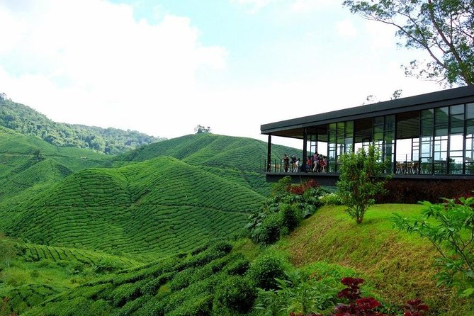 The Cameron Highlands is one of Malaysia's most extensive hill stations. It covers an area of 712-km², about the size of Singapore, At an elevation from 1135-m to 1829-m above sea level.<br><br>Cameron Highlands is the most popular of the highland retreats in Malaysia. Located at almost 2,000 meters at its highest point, Camerons offers visitors a moderate climate with daytime temperatures averaging around 25°C and 18°C at night. This makes the environment conducive for growing continental plants, fruits and vegetables while providing a cool escape for city-dwellers. <br><br>One of the highlights of a visit here is climbing the 272 steps leading up to the temple.