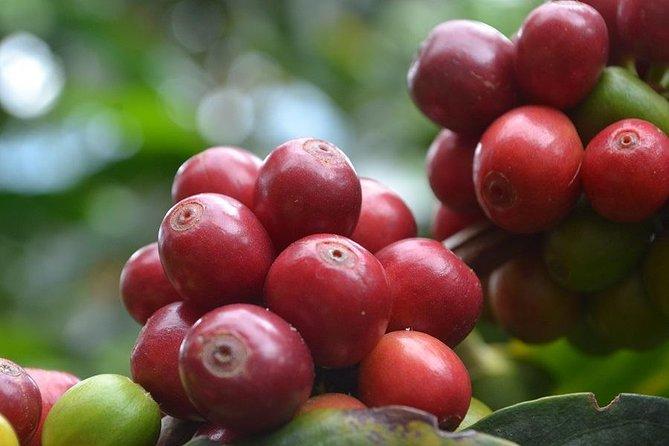 Pijao and Cordoba with Coffee Tasting, ,