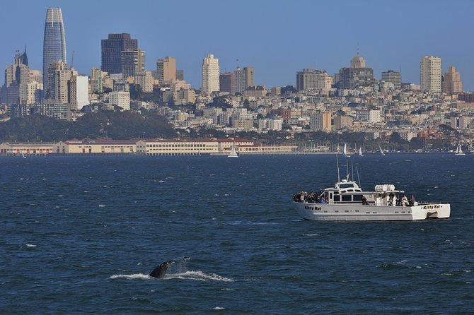San Francisco Golden Gate Whale-Watching Tour, San Francisco, CA, ESTADOS UNIDOS