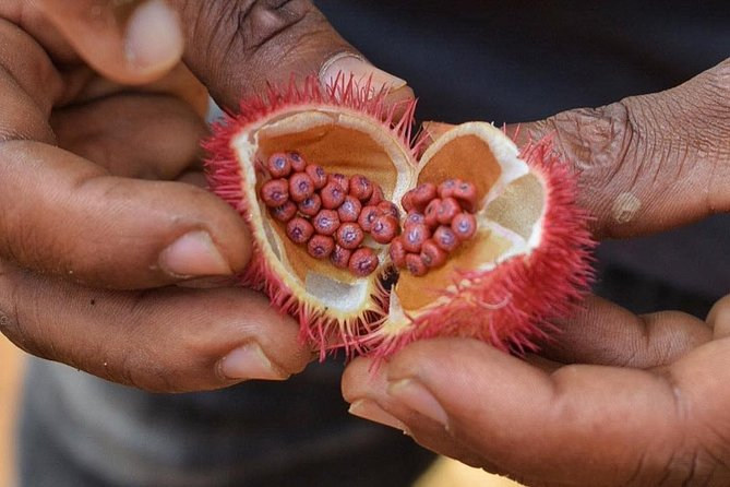 MÁS FOTOS, Taste and Smell the Spices of Zanzibar on Our Special Spice Tour.