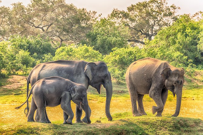 Udawalawe National Park Safari, Parque Nacional Yala, SRI LANKA