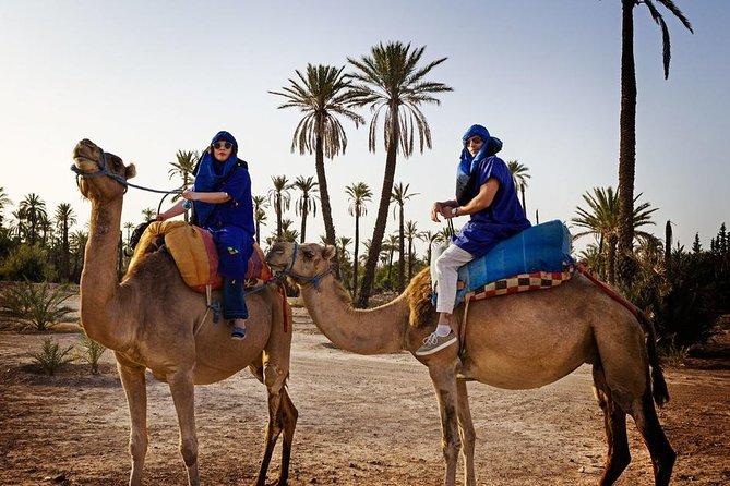 Casablanca to Marrakech Day Trip with Lunch & Camel Ride, Casablanca, MARROCOS