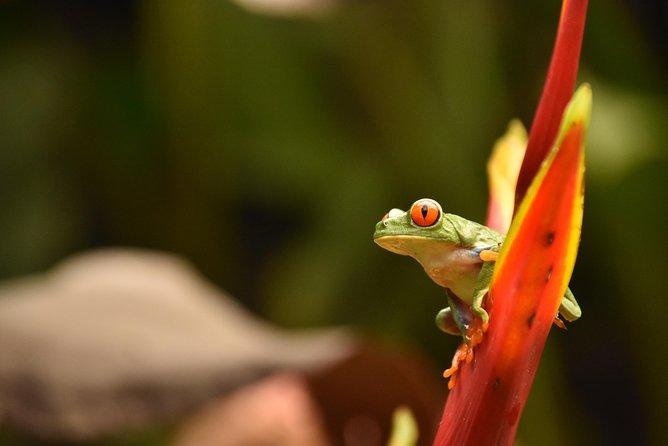 8-Day Tour: Jewels of Costa Rica, San Jose, COSTA RICA