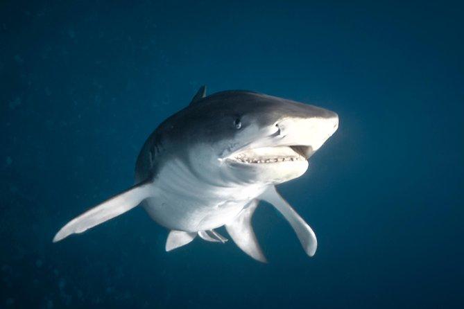 Tiger Shark Expedition, ,