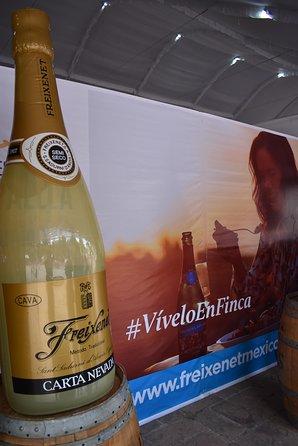 Excursão de Vinhos Cavas Freixenet saindo da Cidade do México, Ciudad de Mexico, MÉXICO
