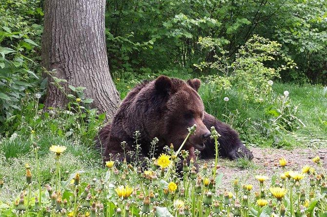 MÁS FOTOS, Private Tour: Bears Sanctuary, Bran Castle & Peles Castle Hotel Pickup/ Drop off