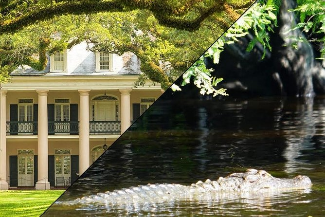 On this full-day tour, you'll be driven to the Oak Alley Plantation House, then see the Cajuns of the bayou living and surviving in harmony with the swamps. Located about an hour and a half outside the city of New Orleans, Oak Alley is one of the most magnificent plantation tours because of the 28, evenly spaced, huge Oak Trees that go from the river road to the Plantation House. Experience bayou living where here, the waterways are their highways. From the relaxed comfort of our covered New Orleans Swamp Tour Boats, you will drift slowly past a 2000 year old Indian Burial Mound, a Cajun cemetery and Fishing village! You may see the wildlife that made the Barataria Swamps the Crown Jewel of the Louisiana Purchase.