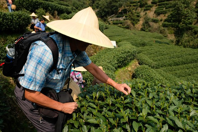 Dragon Well (Longjing) tea is the most famous green tea in China, and it is also ranked No. 1 among China's top 10 teas. Hangzhou, as the birth place of Dragon Well tea, is full of tea culture. If you are a tea fan, this tea culture tour will thoroughly satisfy your thirst. You will have the chance to enter a tea plantation and pick tea-leaves, visit a tea farmer's house and stir-fry tea, learn the art of tea-making, and taste local tea snacks. This is all combined with a West Lake cruise.
