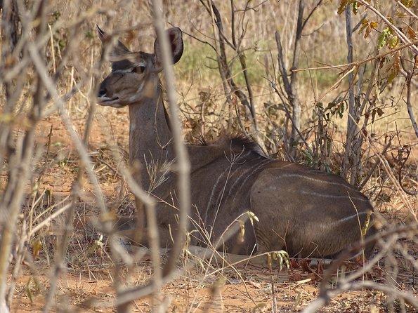 Game drive and short rhino walk, Livingstone, ZIMBABUE