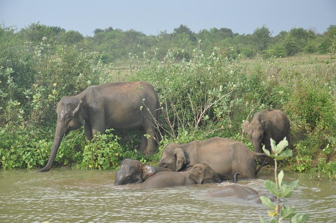 Udawalawe National Park Safari with Lahiru Prasad, ,