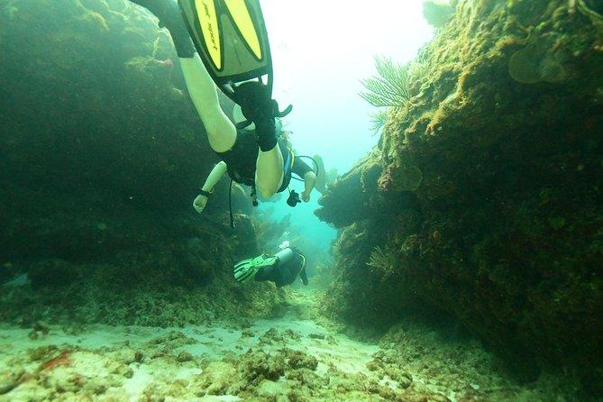Faça mergulho de scuba em Tulum, Tulum, MÉXICO