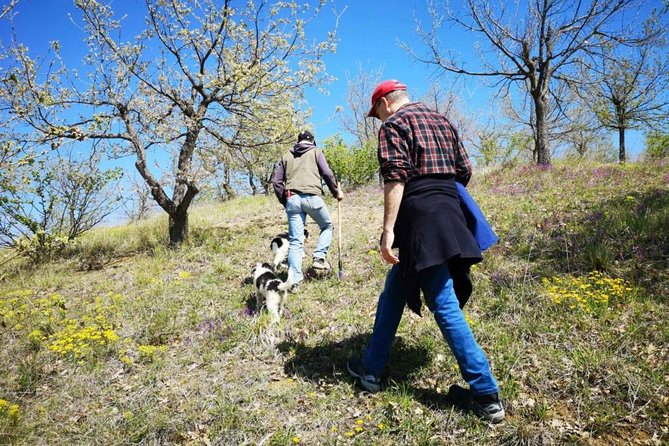 Abruzzo truffle hunt & 7 courses meal, Ascoli Piceno, Itália
