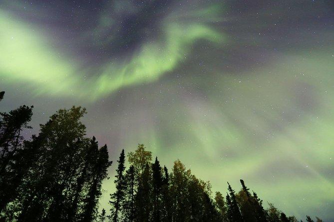 Vista de la aurora boreal con cena incluida y 1 hora en trineo de perros, Fairbanks, AK, ESTADOS UNIDOS