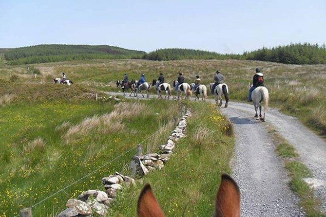 Experience the beautiful County Clare countryside from horseback with this family owned stables. Beautiful views of Slieve Eva, the magnificent Connemara mountain ranges, the iconic Cliffs of Moher and the Aran Islands make this trek is one of the most popular! <br>Whether it's a fun time or an exciting and challenging hack you're looking for we cater for all riders, from young to old with all different levels of experience. <br>Ride some of the best trails the West of Ireland and Wild Atlantic Way have to offer. Each of our trails is unique. We trek through the woodlands, up the hills of Slieve Elva and along peaceful winding green roads into the world-renowned Burren region. <br>This is a livelier 2-hour trek with trots and canters. Suitable for beginner and advanced riders.