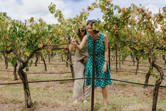 Lovedale & North Pokolbin, Hunter Valley Hop-On and Hop-off Bus Tour, Hunter Valley, AUSTRALIA