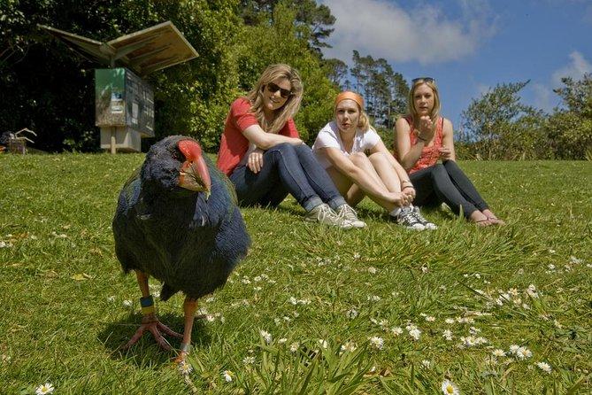 Wellington Highlights Combo Tour Including Cable Car and Guided Zealandia Tour, Wellington, NUEVA ZELANDIA