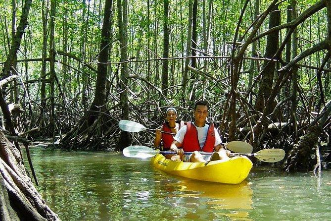 Damas Island Kayaking Tour From Manuel Antonio, ,