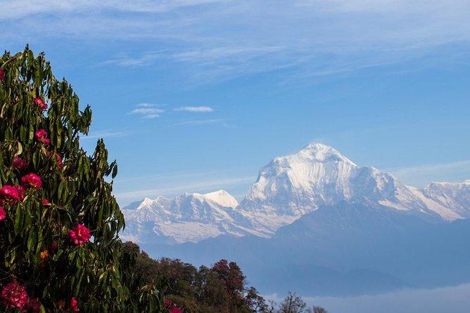 Ghorepani Poon hill Trek -08 Days, Katmandu, Nepal