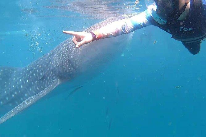 Cebu Whaleshark Journeys, Ciudad de Tagbilaran, FILIPINAS