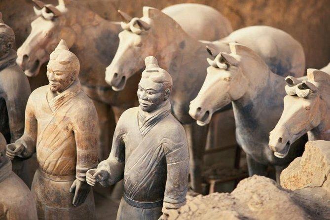 MÁS FOTOS, Zhengzhou Private Trip to Xi'an Terracotta Warriors & City Wall by Bullet Train