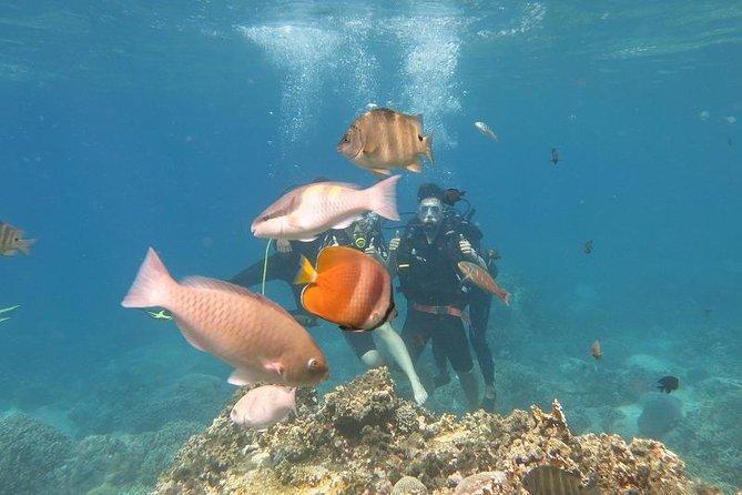 Discover Mun Island with Scuba Diving Tour, Nha Trang, VIETNAM