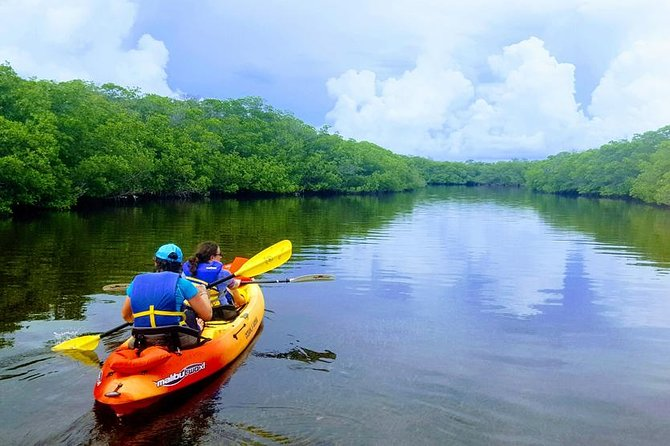 Rent a kayak on your own for the day.  Grab a friend and go out to discover our unique mangrove estuary.  See wildlife and discover a deserted island.  Fun for all ages.