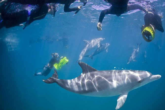 Take some time out from your busy travel schedule and relax with a unique wildlife encounter. <br><br>Our Swim with Wild Dolphins Tour starts at 7am when we collect you from your hotel in our stunning Mercedes GLS350 for the 45 minute drive to meet the tour boat in Rockingham, south of Perth. <br><br>You will spend approx 6 hours on the boat and in the water swimming with different pods of dolphins, before we return you to your hotel at approximately 3pm.