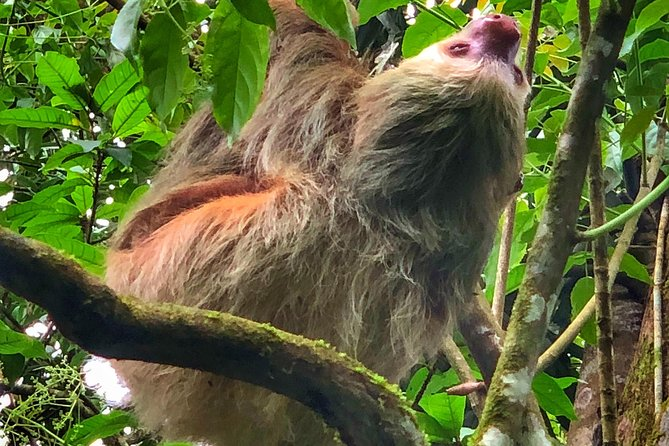 Sloth Watching Tour, ,