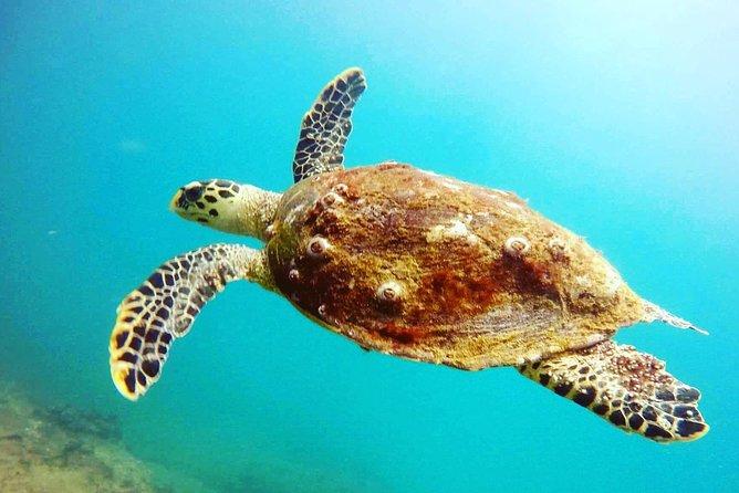 Discover SCUBA Diving in Beautiful Unawatuna Bay, Galle, SRI LANKA