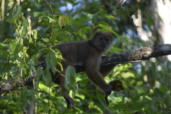 Its a jungle experience near to Puerto Maldonado and very close to the National Reserve with chance to see monkeys, caimans, turtles and join the river from our kayaks. Our guides know very well the are because all are locals