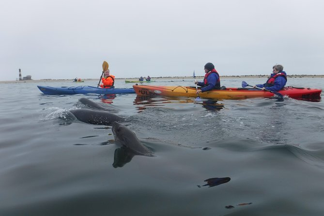 Pelican Point Kayaking Half-Day Tour, Walvis Bay, NAMIBIA