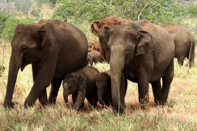 Evening Private Safari at Yala National Park by Yala La Safari Tours, Parque Nacional Yala, SRI LANKA