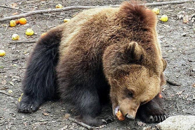 MAIS FOTOS, Libearty Brown Bear Sanctuary, Rasnov Fortress, Bran Castle Day Tour From Brasov
