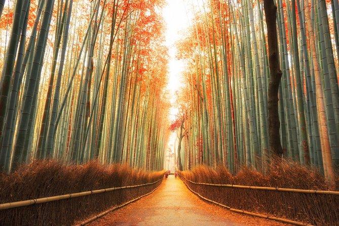 Kyoto Photogenic Tour from Osaka, Osaka, JAPAN
