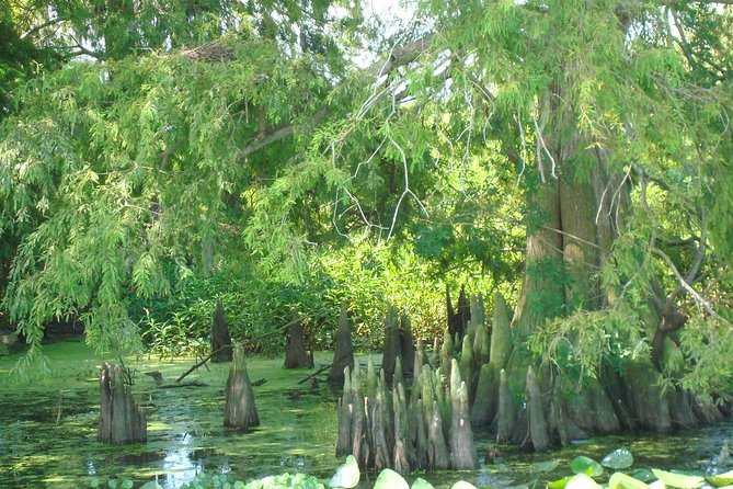 90-min Everglades Airboat Tour Central Florida, Orlando, FL, ESTADOS UNIDOS