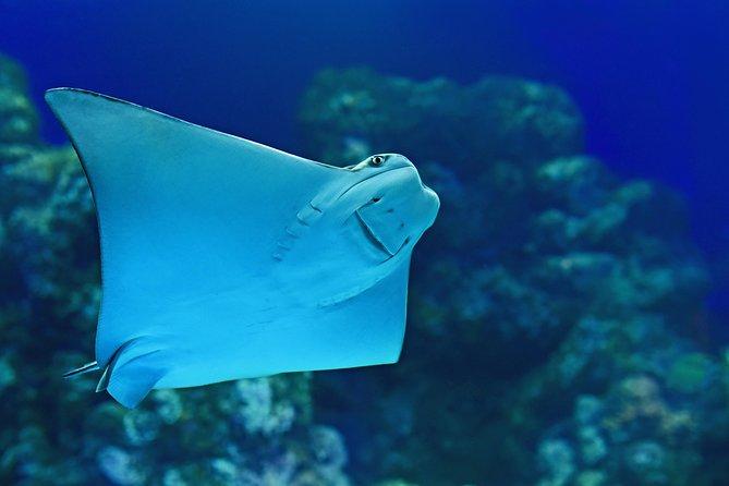 Cairns Aquarium Admission Ticket, Cairns y el Norte Tropical, AUSTRALIA
