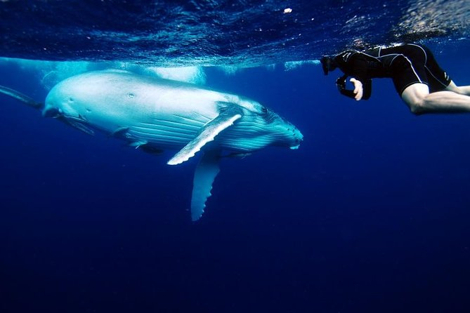 Make everlasting memories and join an expertly guided, 3-hour eco-tour with The Humpback Dive Shack to meet the ocean's ultimate gentle giants: the majestic Humpback Whales. Learn interesting facts from youron-board marine biologist, listen to the whales' haunting songs, watch them play on the surface or even slip in the water and snorkel with them.