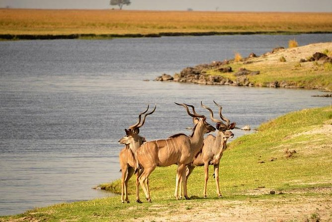 This is full day Safari package comprising a Sunset Cruise on the Chobe River and a Game Drive in the world-famous Chobe National Park, in Botswana. Only an hour's drive from Victoria Falls, the Chobe National Park in Botswana is home to one of the largest game concentrations in Africa. Bordered by the banks of the breath-taking Chobe River, it is famous for its rich elephant and lion population.<br><br>Upon arrival at Chobe National Park, you will begin a game drive in the park. You will have an opportunity to spot native wildlife, including game cats and elephants in their natural environment.<br>Lunch will be served at the Chobe Safari Lodge around noon, and then enjoy free time relaxing in the shade before a 3-hour boat cruise on the Chobe River. Look out for birds and other wildlife throughout the cruise, which ends with a view of the sunset over the river.
