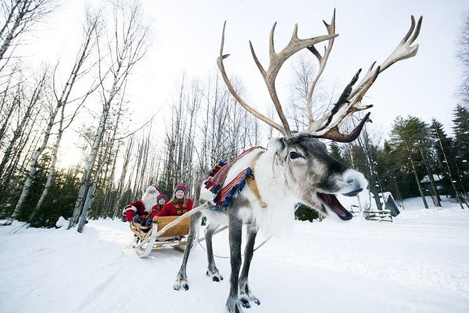 In addition to a reindeer ride you also have the chance to try other winter activities, such as ice fishing on the lake, snowshoeing in the forest, or fast paced sled sliding. You also have the chance to try the traditional lasso throwing. Or you can just enjoy the peace and quiet of nature and the twilight of winter.