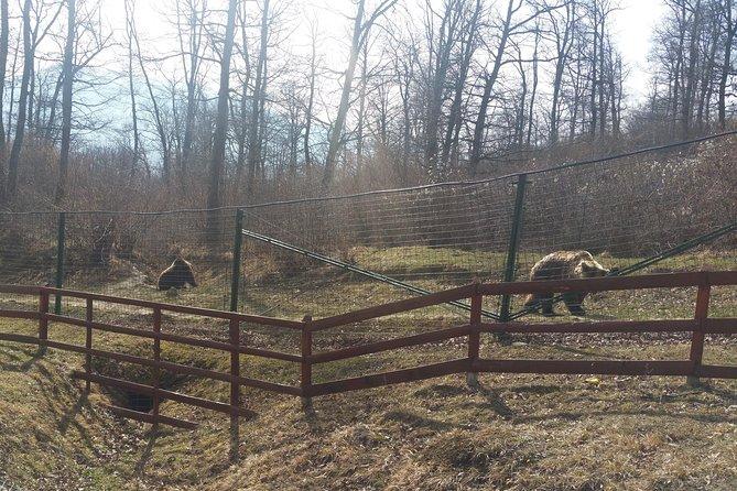 MÁS FOTOS, Small-Group Libearty-Liberty Bear Sanctuary Zarnesti Trip from Brasov