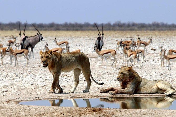 3 Day Etosha National Park Guided Camping Safari, Walvis Bay, NAMIBIA