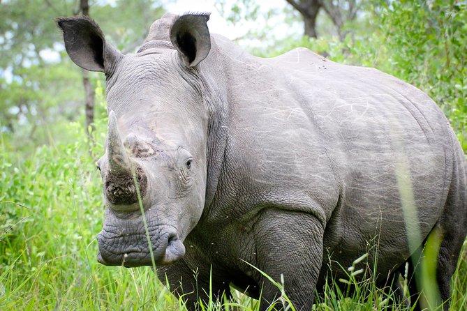 Amazing Rhino Trekking and birding to the biggest rhino sanctuary in Uganda loacted in Nakasongola towards Murchison NP