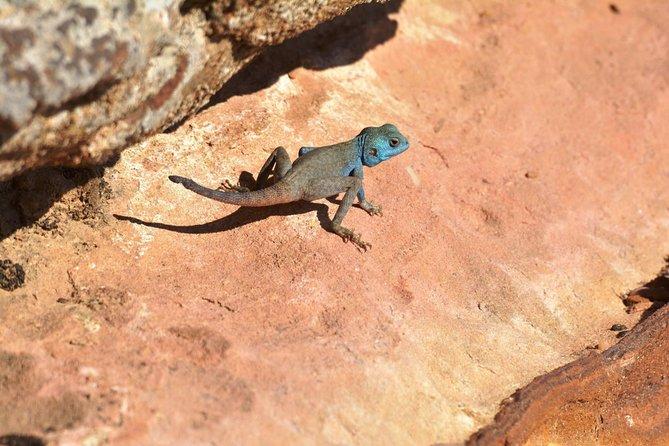 Private Petra Highlights Day Tour, Petra, JORDANIA