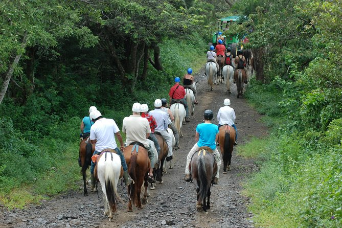 Buena Vista Transition Forest Combo Tour, Playa Flamingo, COSTA RICA